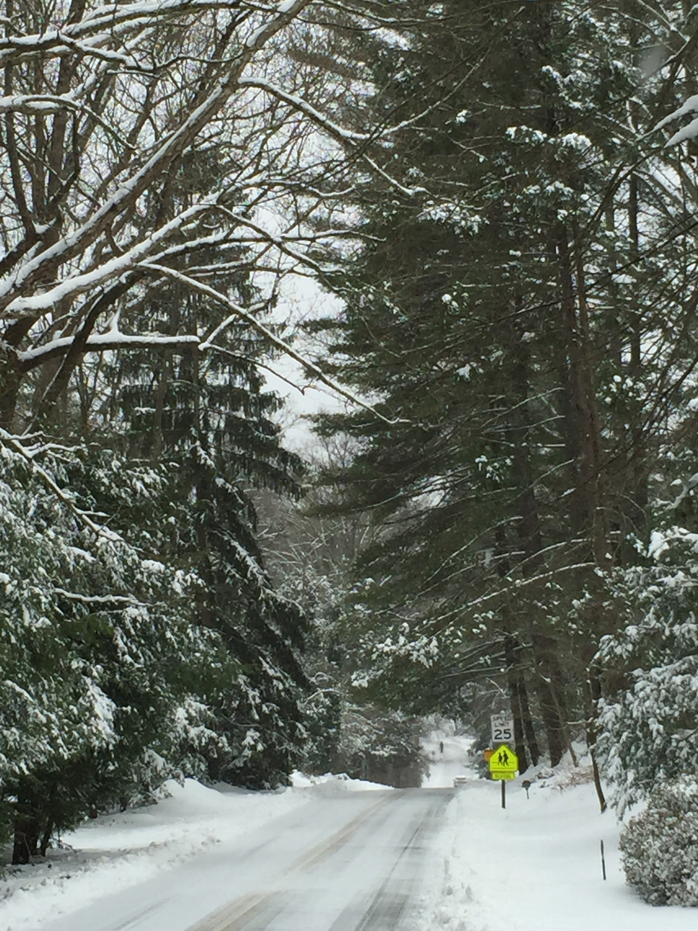 snow-pic1.jpg
